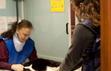 diagnostic veterinary service, delavan animal diagnostics, delavan animal clinic