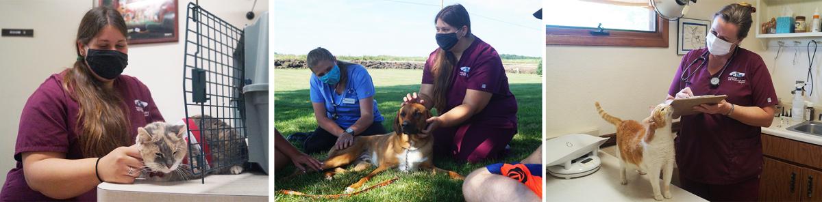 about us, delavan animal clinic, delavan veterinarians