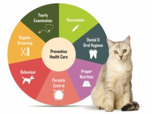 preventative veterinary service, delavan vet, veterinarian in delavan