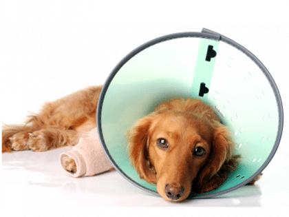 veterinary surgery in delavan, delavan animal clinic, pet surgery delavan